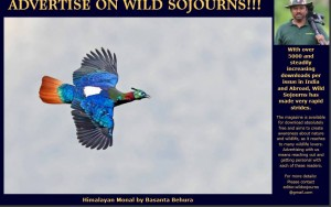 Wild Sojourns Magazine May-June 2016 Edition Features My Himalayan Monal Shot!
